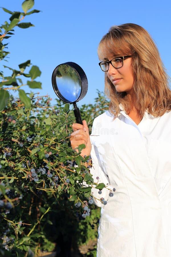 Mulher que faz a inspeção de alimento e o controle da qualidade com lupa imagens de stock royalty free