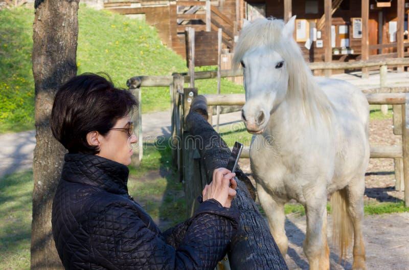 Mulher que fotografa um cavalo branco atrás de uma cerca de madeira imagens de stock royalty free