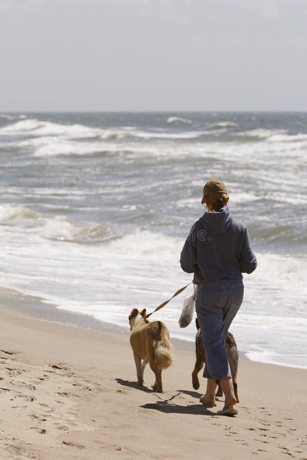 Mulher que funciona na praia com cães foto de stock