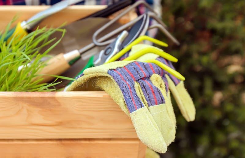 Mulher que guarda a caixa de madeira com planta verde e ferramentas de jardinagem fora, close up foto de stock royalty free