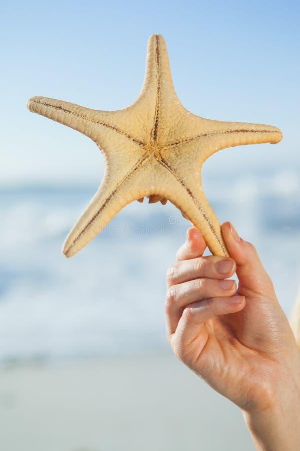 Mulher que guarda a estrela do mar na praia fotos de stock