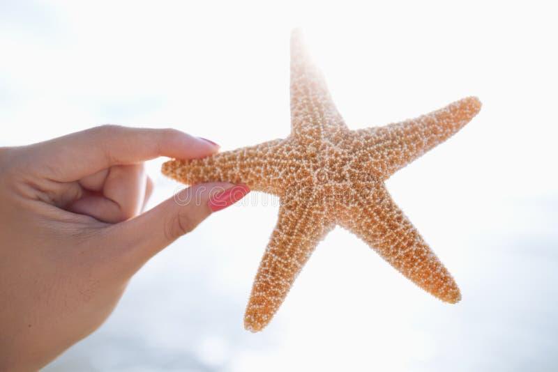 Mulher que guarda a estrela do mar na praia fotos de stock royalty free