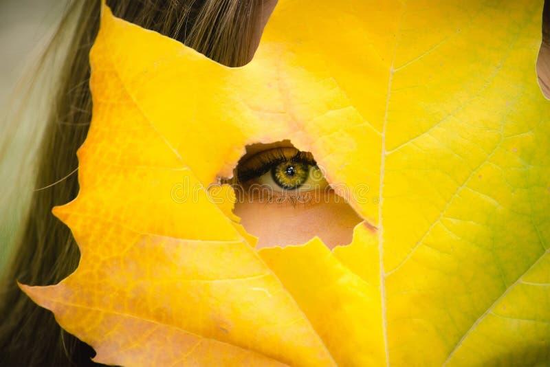Mulher que guarda a folha amarela, fundo do outono imagens de stock