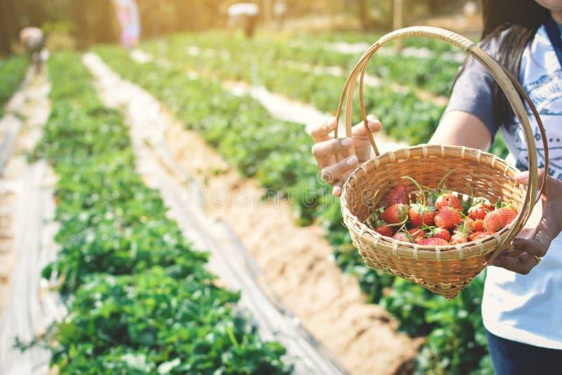 Mulher que guarda a morango fresca na cesta foto de stock