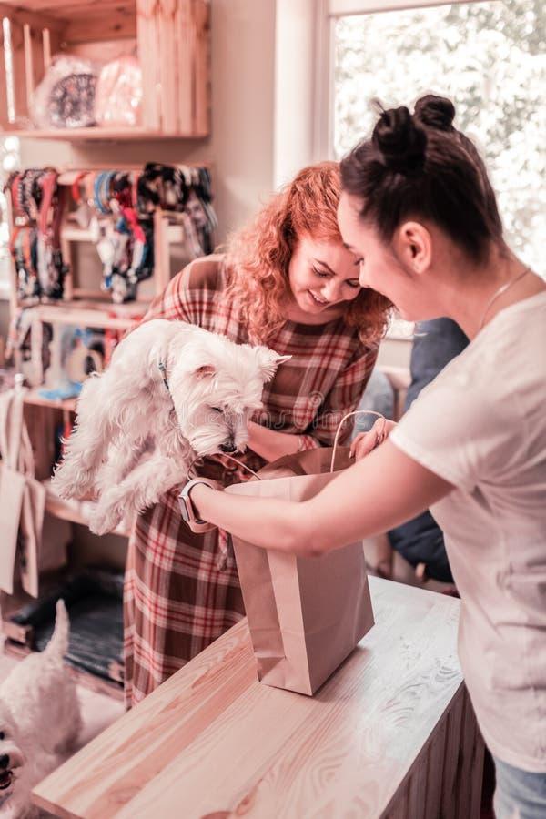 Mulher que guarda seu cão macio ao comprar na loja de animais de estimação foto de stock royalty free