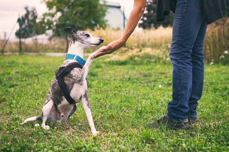 Mulher que guarda sua pata do ` s do cão no treinamento fotografia de stock