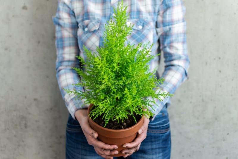Mulher que guarda um houseplant fotografia de stock royalty free