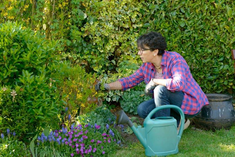 Mulher que jardina as flores em seu jardim bonito foto de stock