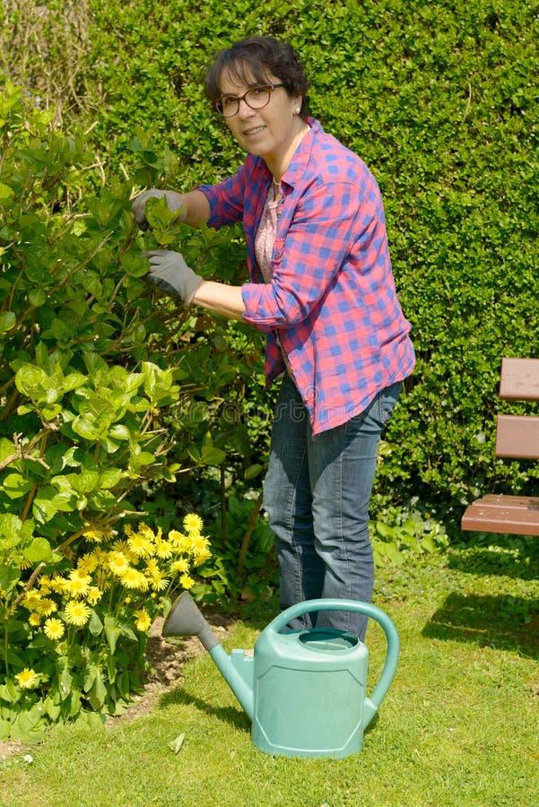 Mulher que jardina as flores em seu jardim bonito foto de stock royalty free