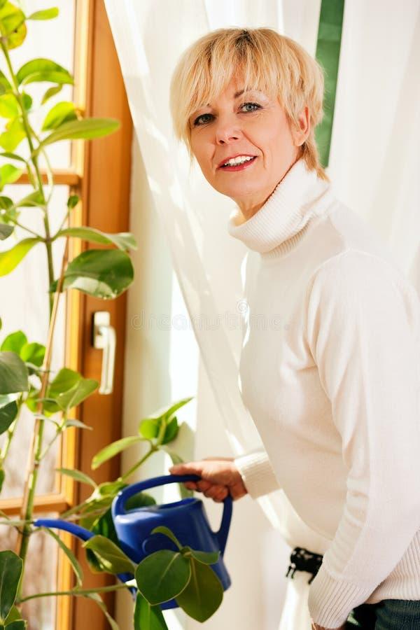 Mulher que molha as flores em casa imagem de stock royalty free