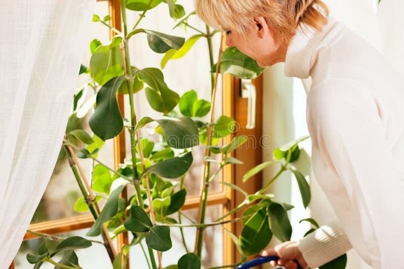 Mulher que molha as flores em casa imagens de stock royalty free