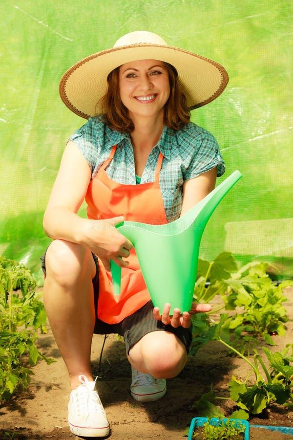 Mulher que molha plantas de tomate verdes na estufa foto de stock