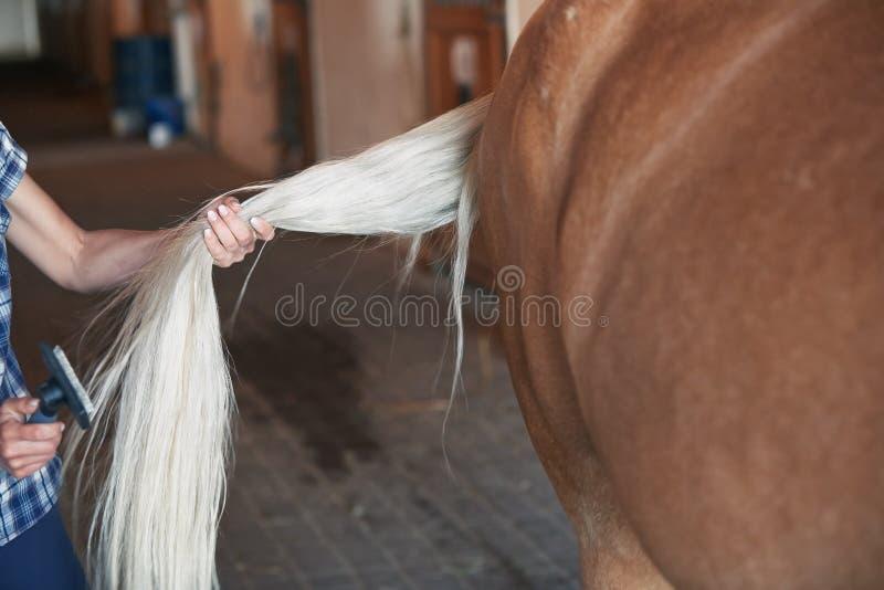 Mulher que penteia a cauda do cavalo fotos de stock royalty free