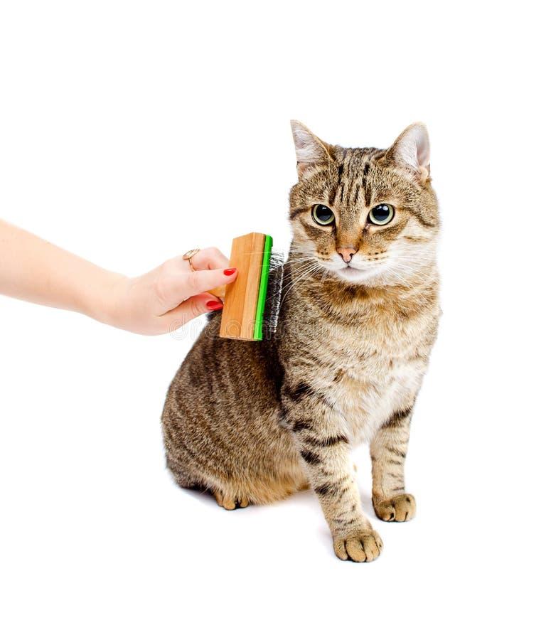 Mulher que penteia o gato de gato malhado imagens de stock royalty free