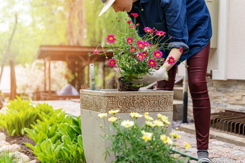 Mulher que planta flores no jardim do potenciômetro em casa imagens de stock royalty free