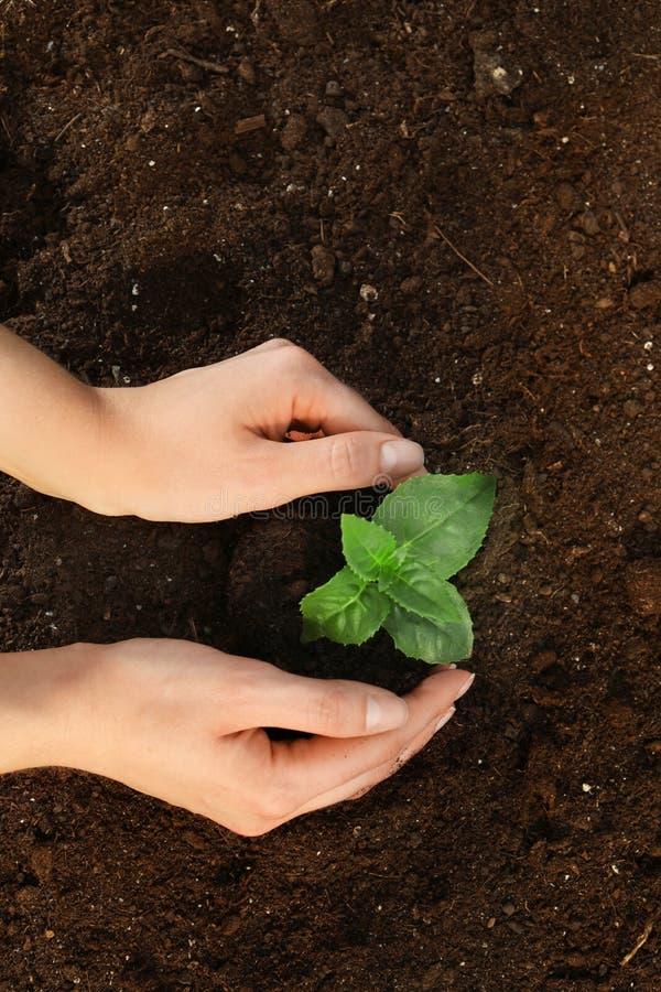 Mulher que planta a plântula verde no solo, vista superior imagem de stock royalty free