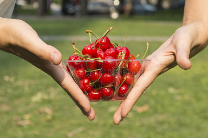 Mulher que prende cerejas vermelhas fotos de stock