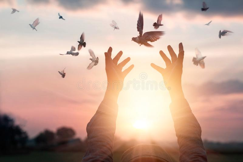 A mulher que reza e livra os pássaros à natureza no fundo do por do sol foto de stock royalty free