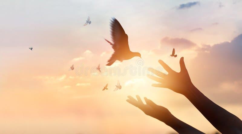 A mulher que reza e livra os pássaros que voam no fundo do por do sol fotografia de stock