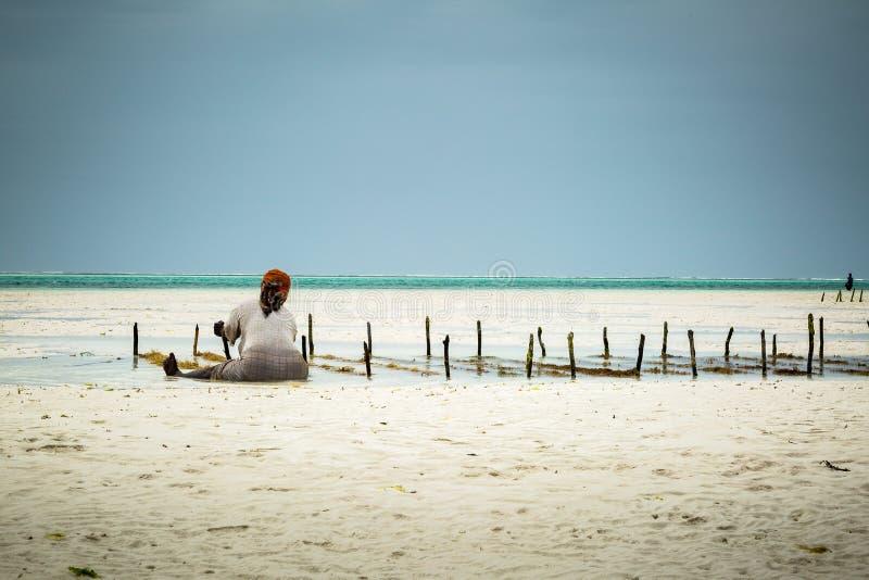 Mulher que senta-se na areia na costa de Zanzibar que recolhe a alga imagens de stock royalty free