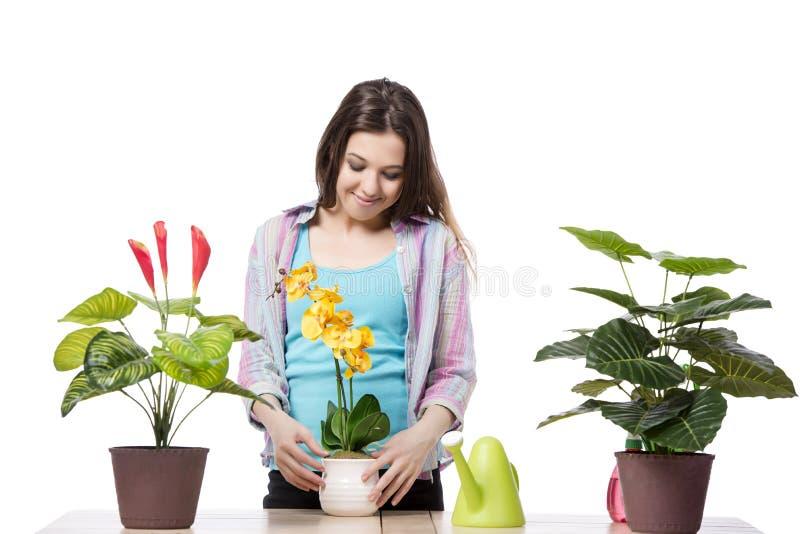 A mulher que toma da planta isolado no branco fotografia de stock royalty free