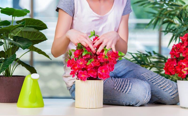 A mulher que toma das plantas home fotografia de stock