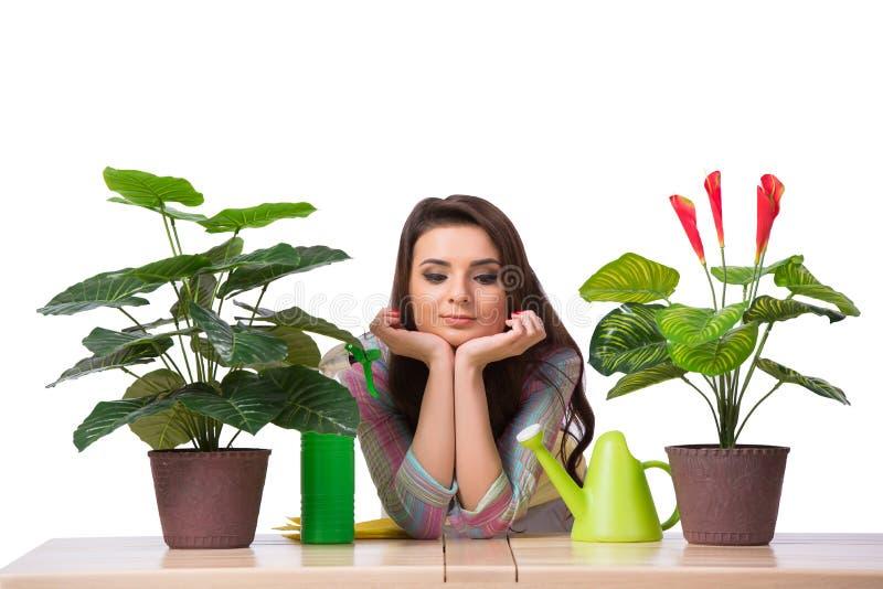 A mulher que toma das plantas isoladas no branco foto de stock royalty free
