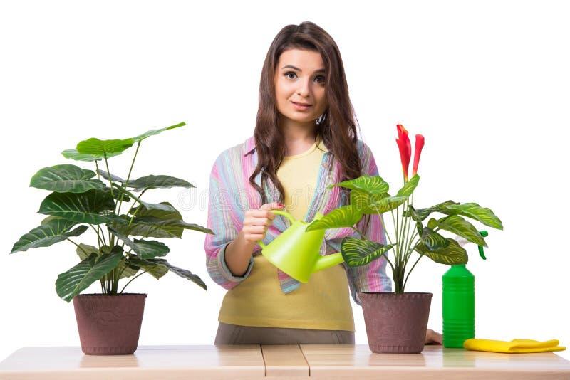A mulher que toma das plantas isoladas no branco imagens de stock royalty free