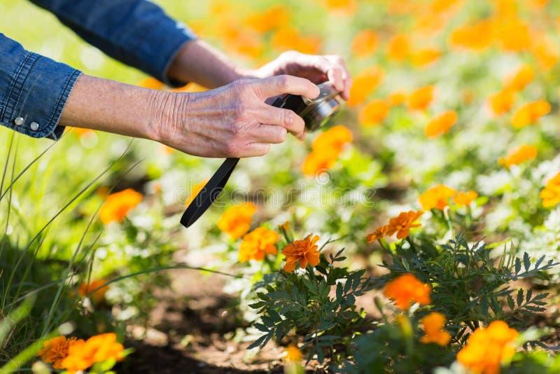 Mulher que toma flores da foto imagens de stock royalty free