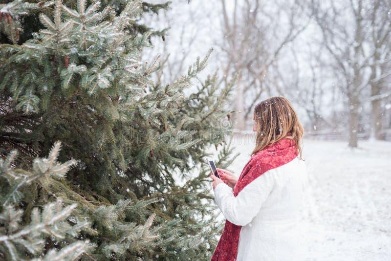 Mulher que toma a foto da neve fresca no ramo de pinheiro com smartp fotos de stock