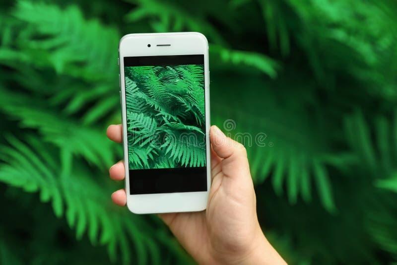 Mulher que toma a foto das folhas tropicais verdes bonitas no jardim botânico, fotos de stock royalty free