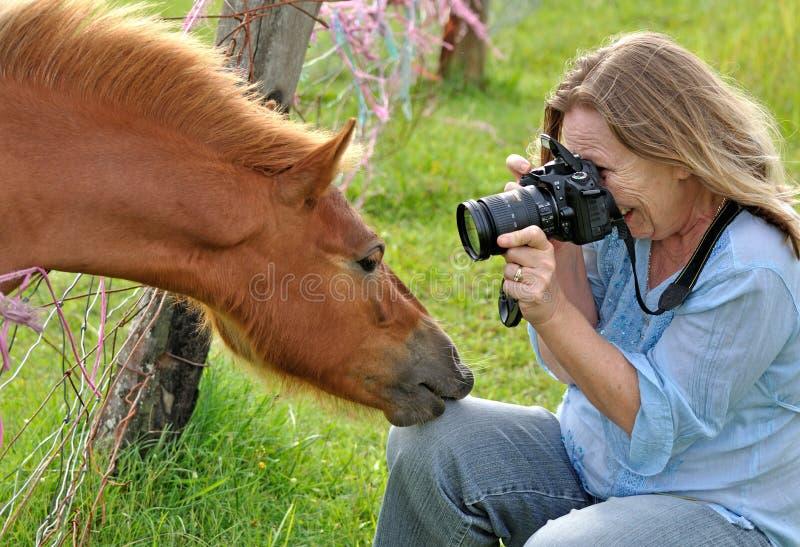 Mulher que toma a fotografia de um pônei com câmera de DSLR fotografia de stock royalty free