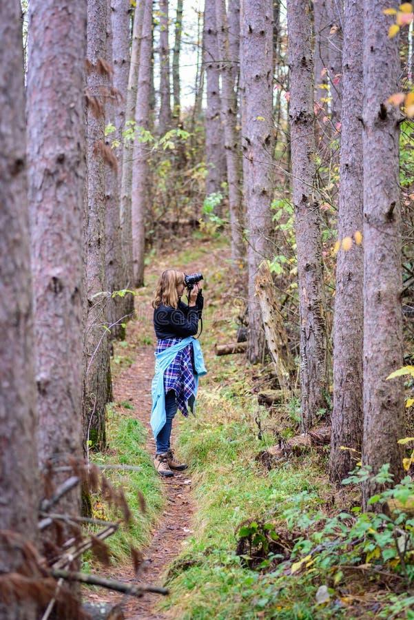 Mulher que toma fotos na floresta do pinho fotos de stock royalty free
