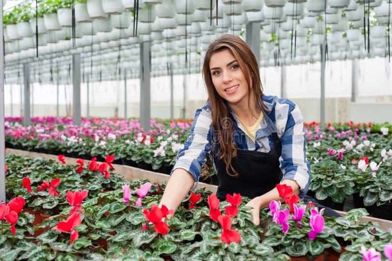 Mulher que trabalha com flores fotos de stock royalty free