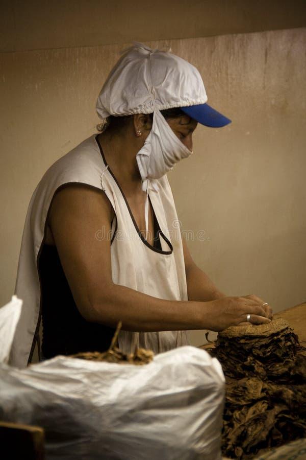 Mulher que trabalha em uma fábrica do charuto fotos de stock royalty free
