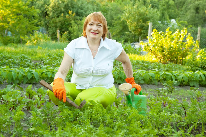 Mulher que trabalha no campo da cenoura fotos de stock