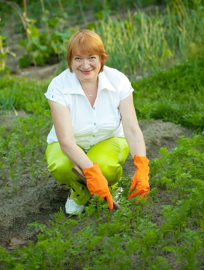 Mulher que trabalha no campo da cenoura foto de stock