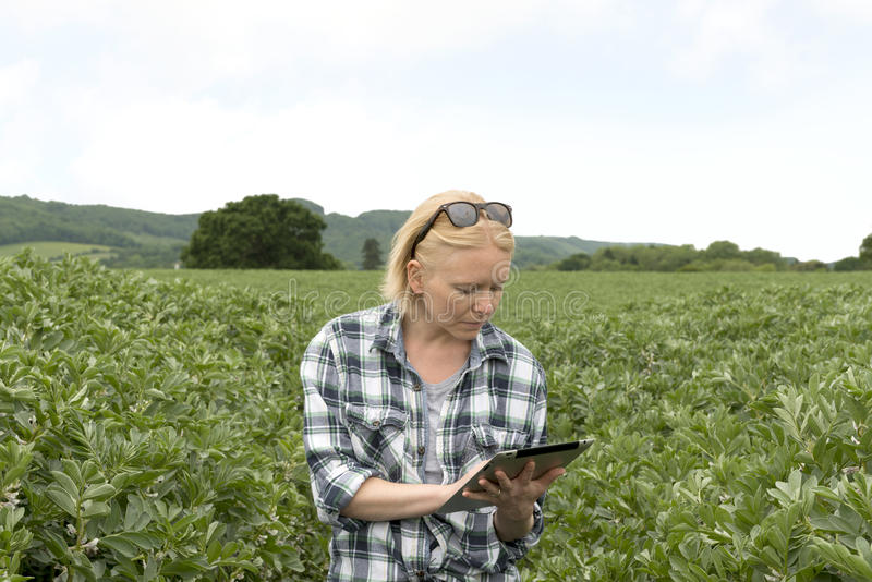 Mulher que usa seu tablet pc em uma plantação exterior fotos de stock