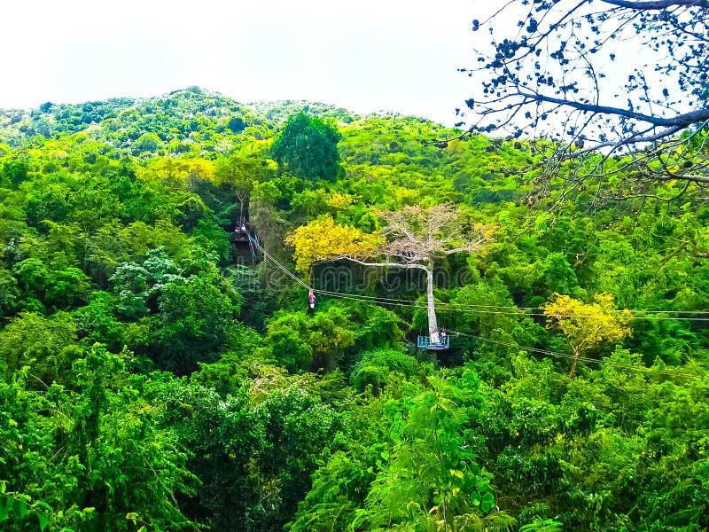 Mulher que vai em uma aventura do zipline da selva fotografia de stock royalty free