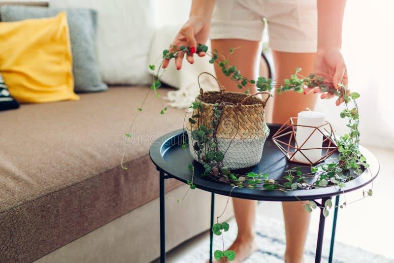 Mulher que verifica quanto tempo a corda dos corações cresceu em casa Dona de casa que toma de plantas e de flores da casa fotos de stock