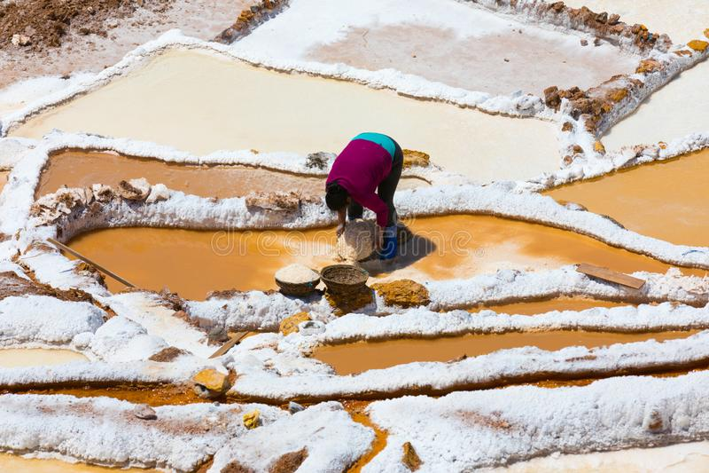 A mulher recolhe o sal nas bacias terraced de Moray Peru fotografia de stock royalty free