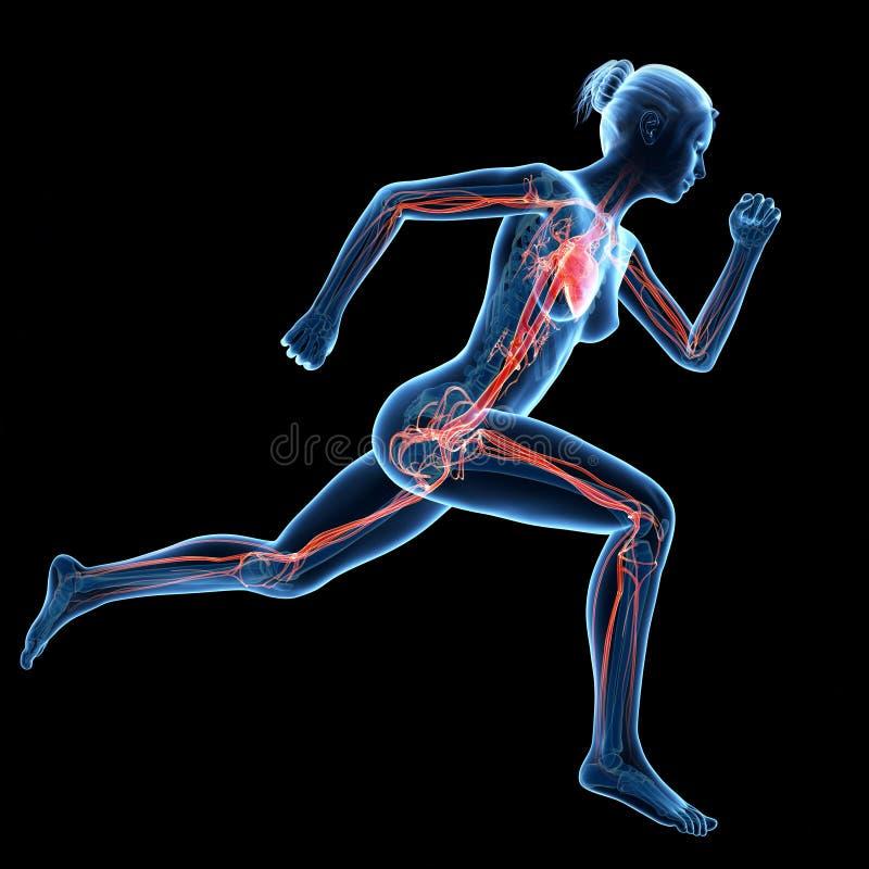 Mulher Running ilustração do vetor