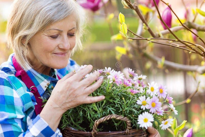 Mulher sênior com flores imagens de stock royalty free