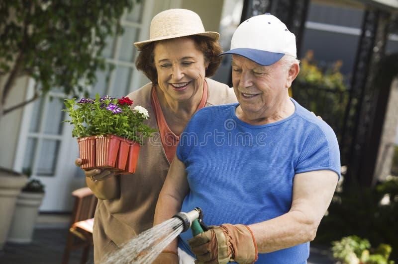 Mulher sênior que ajuda a plantas molhando do marido imagens de stock