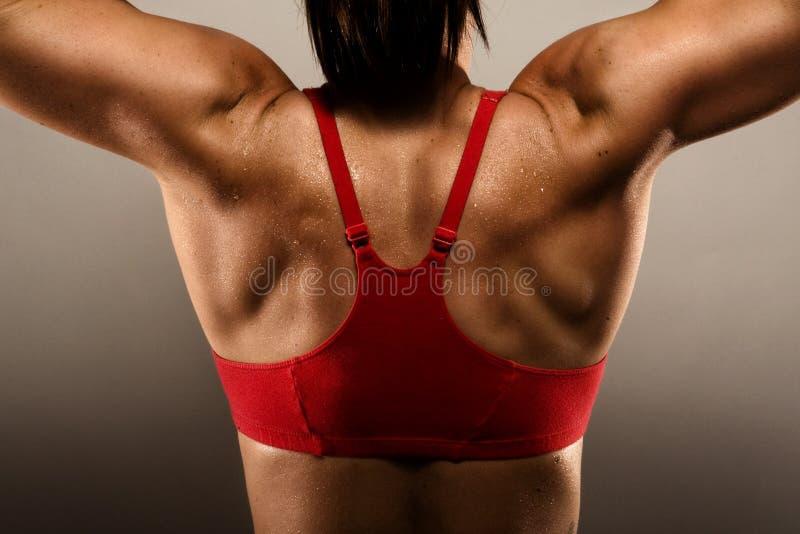 Mulher saudável da aptidão que mostra seus para trás músculos fotos de stock
