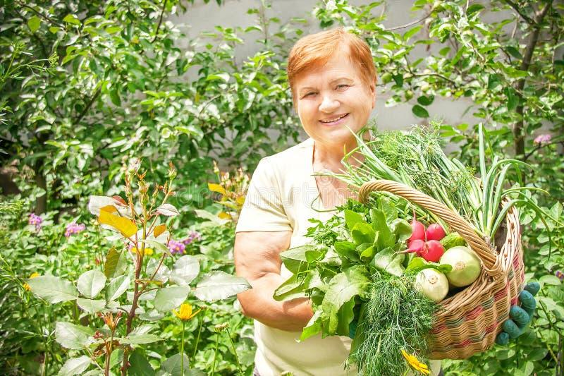 A mulher superior ativa do jardineiro está guardando a cesta recentemente do picke fotografia de stock