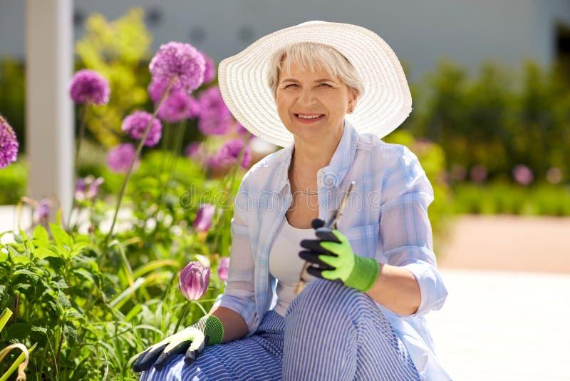 Mulher superior com tesoura de podar manual e flores do jardim imagens de stock