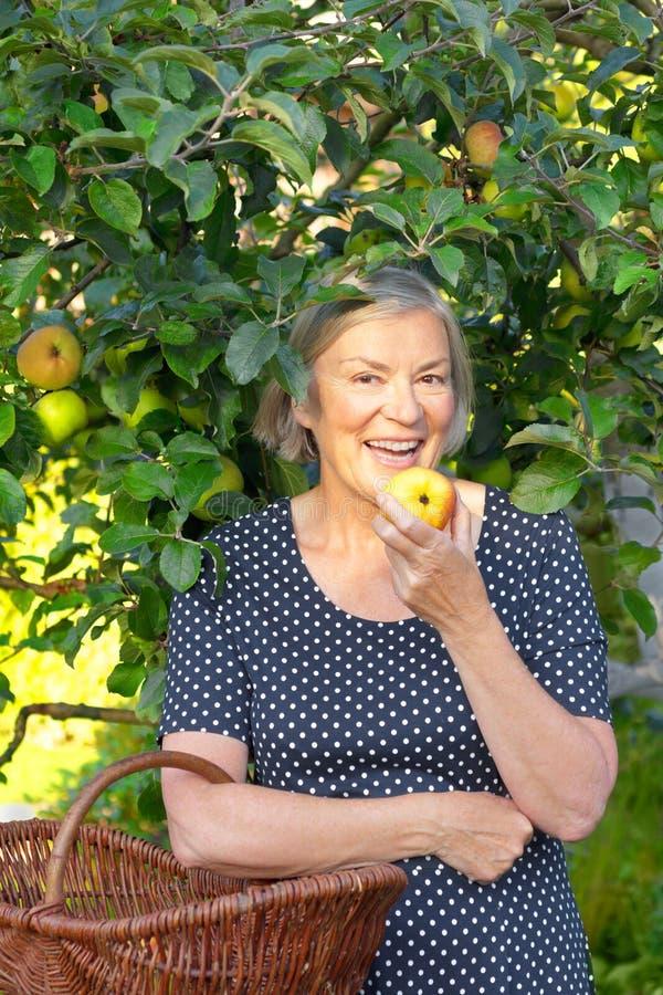 Mulher superior que come a árvore de maçã foto de stock