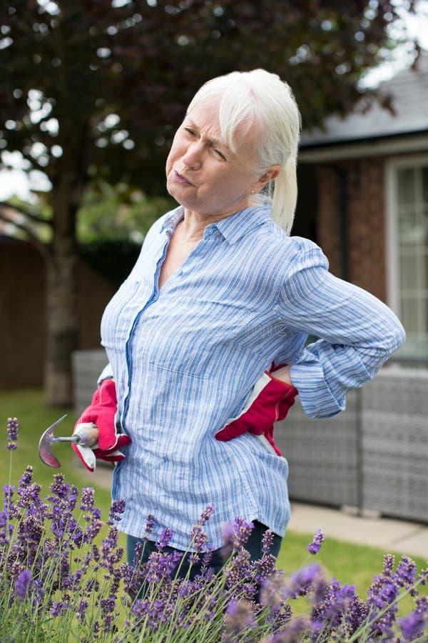 Mulher superior que sofre da dor lombar enquanto jardinando em casa fotos de stock