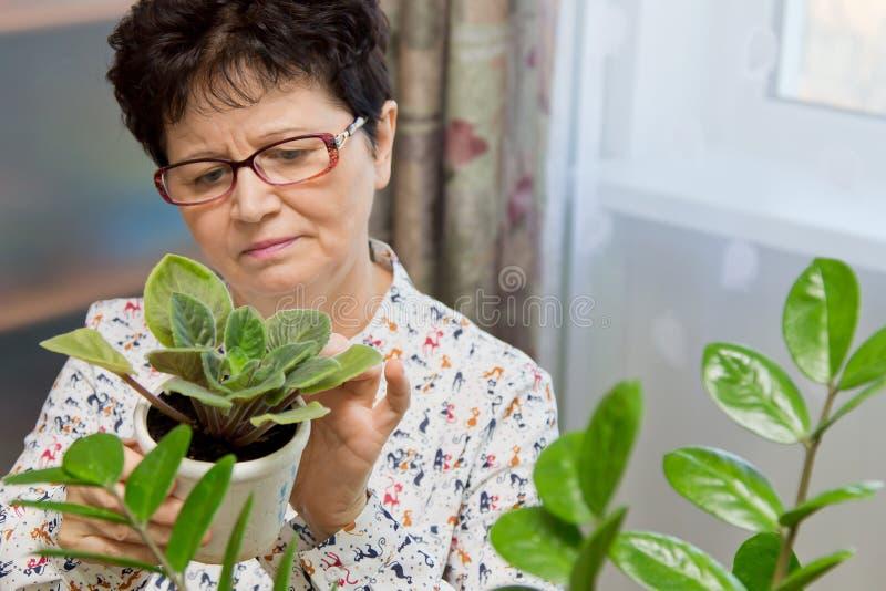 Mulher superior que toma das plantas em casa fotografia de stock royalty free